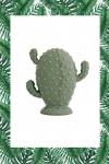 cactus-vert-rond