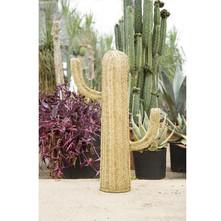 https://www.vente-exclusive.com/fr-BE/surdic-qs22172#/d/cactus-jaune/5041134